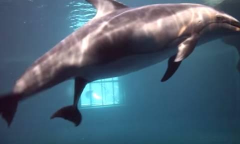 Συγκλονιστικό βίντεο: Καρέ-καρέ η γέννηση δελφινιού