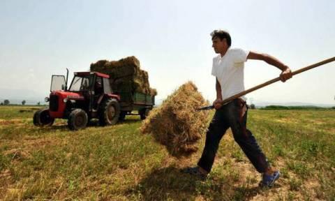 ΟΠΕΚΕΠΕ - Αγροτικές επιδοτήσεις: Άνοιξε το σύστημα για τον έλεγχο με το ΑΦΜ