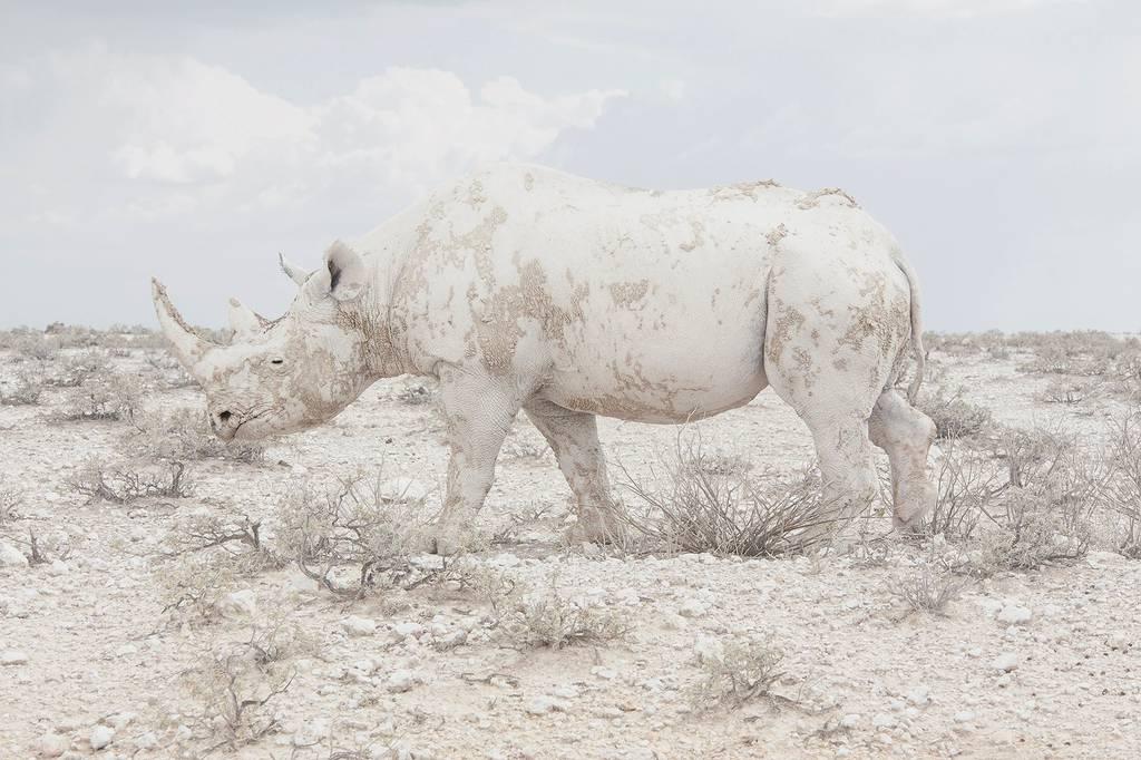 Sony World Photography: Δείτε τις ωραιότερες φωτογραφίες του μεγαλύτερου διαγωνισμού στον κόσμο