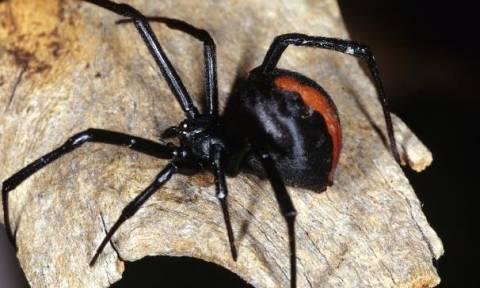 Τον δάγκωσε δηλητηριώδης αράχνη στο πέος και δείτε τι έπαθε λίγη ώρα αργότερα!
