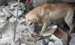 Εκουαδόρ: Σκύλος διασώστης πέθανε από υπερκόπωση αφού πρώτα έσωσε εφτά ζωές