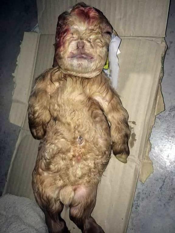 Ανατριχιαστικό: Κατσικάκι γεννήθηκε με πρόσωπο ανθρώπινου βρέφους! (photos)