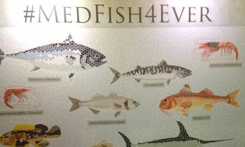 SOS από την ΕΕ για τη Μεσόγειο: Λιγοστεύουν επικίνδυνα τα ψάρια