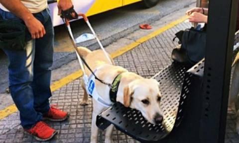 Δεν έχει προηγούμενο: Οδηγός λεωφορείου κατέβασε τυφλή γυναίκα λόγω του σκύλου-οδηγού της (pic)