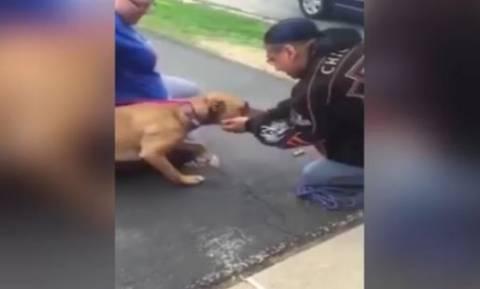 Η συγκινητική αντίδραση σκύλου που είδε τον ιδιοκτήτη του μετά από 2 χρόνια (vid)