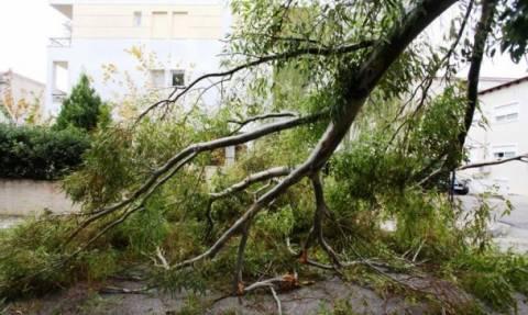 Θεσσαλονίκη:Έσπασαν δέντρα από την νεροποντή