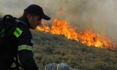 Καταστροφικό το πέρασμα της φωτιάς στην Κίσαμο - Στάχτη 200 στρέμματα γεωργικής έκτασης