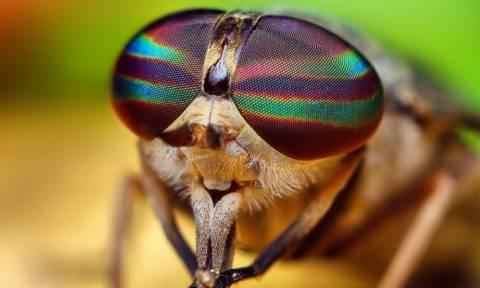 Άγνωστο είδος μύγας ανακαλύφθηκε στις... Βρυξέλλες!