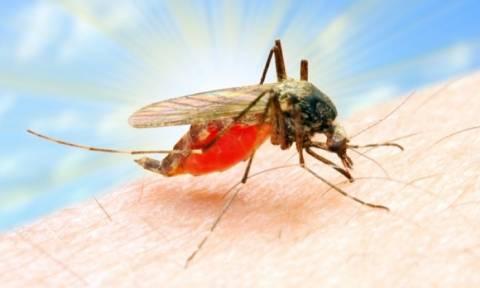 Το τσίμπημα του κουνουπιού στο μικροσκόπιο (βίντεο)