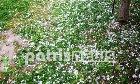 Ηλεία: «Φονικό» χαλάζι «χτύπησε» τις καλλιέργειες