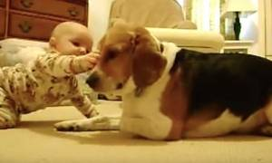Ανεκτίμητες στιγμές! Όταν το Beagle της οικογένειας συναντά το νεογέννητο μωρό (vid)