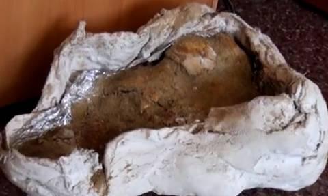 Απολιθωμένοι χαυλιόδοντες 4 εκ. ετών βρέθηκαν στη Νιγρίτα Σερρών (VIDEO)