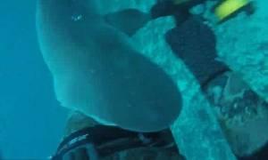 Τρόμος στο βυθό: Δείτε τη στιγμή που καρχαρίας επιτίθεται σε ψαρά! (video)