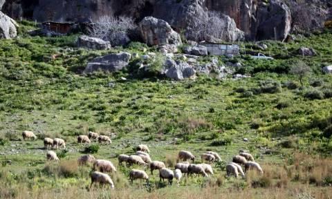 Μεταβίβαση δικαιωμάτων βοσκοτόπων σε νέους γεωργούς - Όλες οι οδηγίες