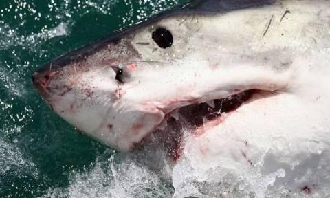 Ναυαγοσώστες σκότωσαν καρχαρία για να βγάλουν... selfie (pics&vid)