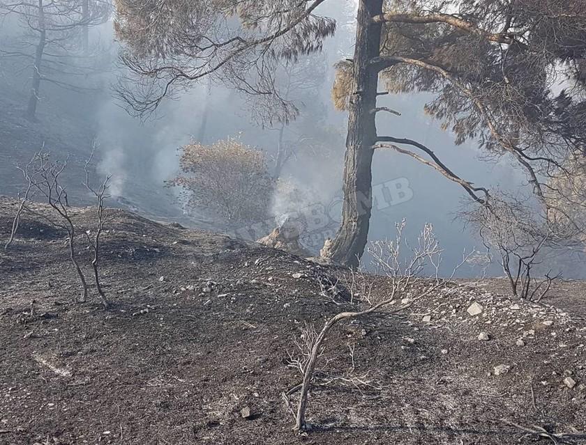 Πύρινος εφιάλτης στην Κύπρο: Νεκρός ένας πυροσβέστης – Εκκενώθηκαν χωριά