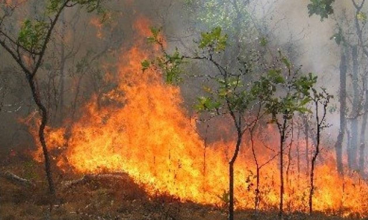 Φωτιά Τώρα: Προς Πάρνηθα κινείται η πύρινη λαίλαπα που κατακαίει τα Δερβενοχώρια