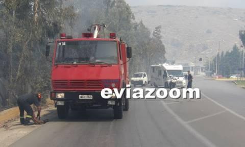 Συναγερμός στη Χαλκίδα: Μεγάλη φωτιά στον Άγιο Στέφανο - Απειλείται κατοικημένη περιοχή (vid&pics)