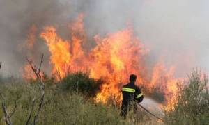 Συναγερμός στην Κρήτη: Δύο πύρινα μέτωπα σε Μεσοχώρι και στο Φαράγγι Θέρισου