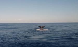 У берегов Крита заметили большого кита