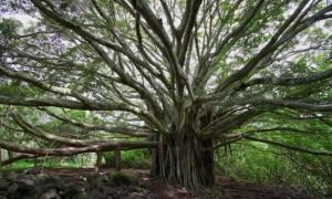 Απίστευτο: Γυμνές γυναίκες φυτρώνουν σε μυστηριώδες δέντρο; (video+photos)