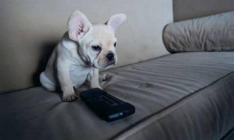 Οι σκύλοι αποκτούν το δικό τους τηλεκοντρόλ! (pic)