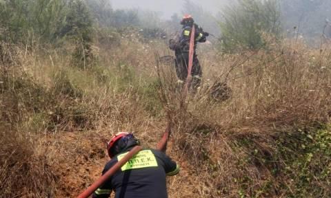 ΤΩΡΑ: Πυρκαγιά στη Μυτιλήνη – Χωρίς ρεύμα όλο το νησί