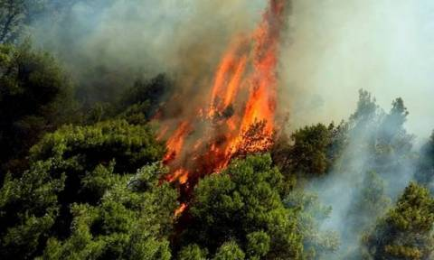 На острове Самос вторые сутки пожарные службы борются с огнем