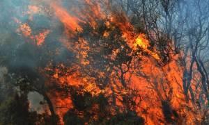 Φωτιά σε οικόπεδο στις Αχαρνές