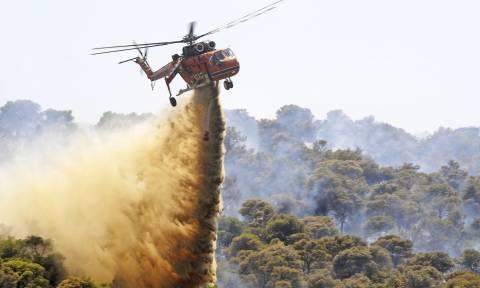 Συναγερμός στην Πυροσβεστική: Πυρκαγιά στον  Όλυμπο