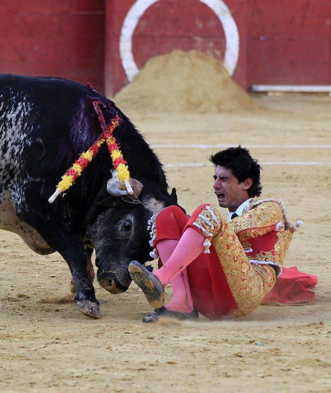 Ισπανία: Θα σφάξουν τη μητέρα του ταύρου που σκότωσε τον ματαδόρ! Δείτε γιατί (video)