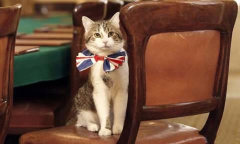 Λονδίνο: Ο Κάμερον φεύγει... τι θα γίνει με τον γάτο της Ντάουνινγκ Στριτ;