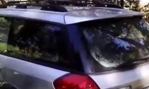 Αρκούδα παγιδεύτηκε σε αυτοκίνητο και κανείς δεν γνωρίζει πώς!