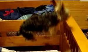 Ξεκαρδιστικό! Ο σκυλάκος που τρελαίνεται να χοροπηδάει πάνω στο κρεβάτι! (video)