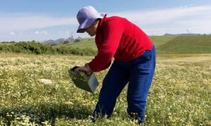 Σημαντική είδηση για τους αγρότες: Πως θα πάρετε σύνταξη στα 62