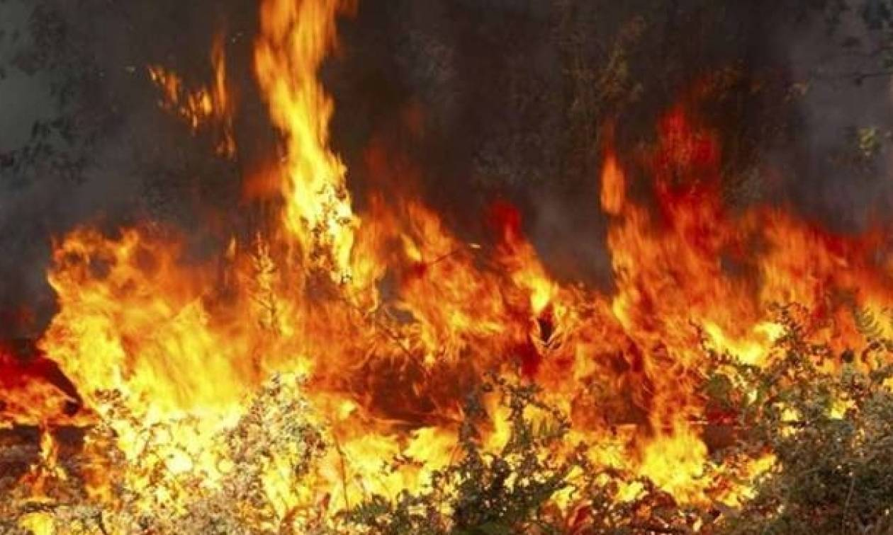 Λάρισα: Μαίνεται σε δύο μέτωπα η φωτιά στους Γόννους – Γιγαντιαία πυροσβεστική επιχείρηση