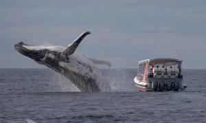 Αυτή είναι η φωτογραφία της χρονιάς: Η πιρουέτα φάλαινας που κανείς δεν είδε…