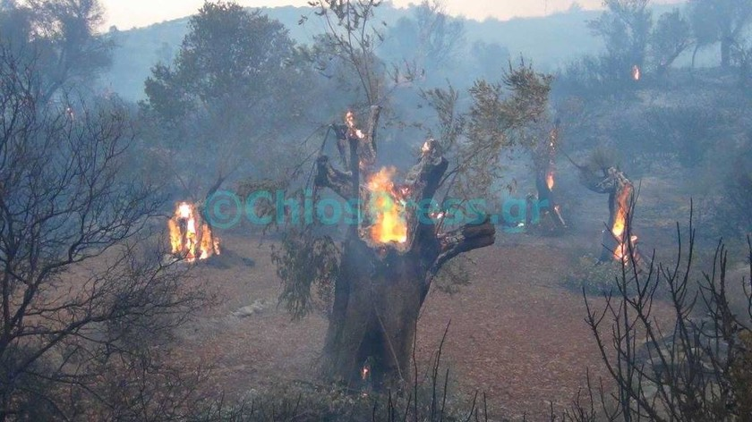 Μεγάλη φωτιά στη Χίο - Εκκενώθηκαν χωριά (photos - video)