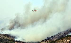 Φωτιά Χίος: Η περιφερειάρχης Β. Αιγαίου στο CNN Greece