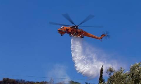 Φωτιά Χίος: Η πυρκαγιά αφάνισε καλλιέργειες μαστιχόδεντρων