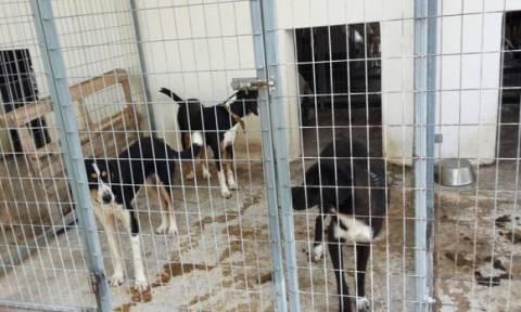 Σέρρες: Καταδικάστηκε ο 37χρονος που χτύπησε και έκαψε δύο σκυλιά στο δημοτικό κυνοκομείο