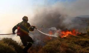 Φωτιά στη Λακωνία - Υπό μερικό έλεγχο η πυρκαγιά στη Χαλκιδική