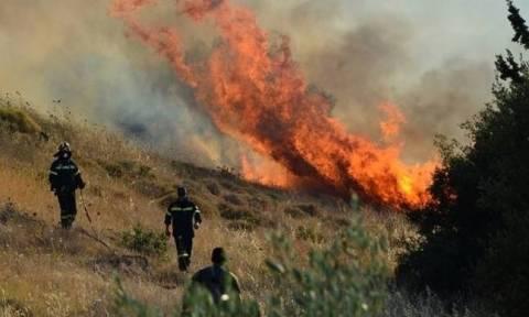 Ασπρόπυργος: Προφυλακίστηκε 37χρονος ως υπαίτιος πρόκλησης δώδεκα πυρκαγιών
