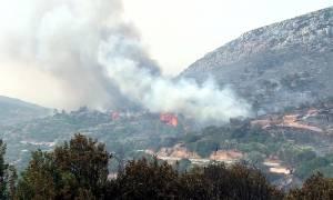 Φθιώτιδα: Υπό μερικό έλεγχο η πυρκαγιά στη Λάρυμνα