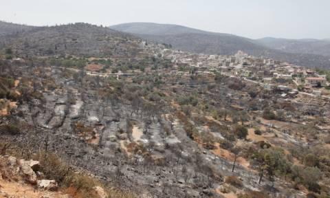 Φωτιά Χίος: Γρήγορα οι αποζημιώσεις στους μαστιχοπαραγωγούς
