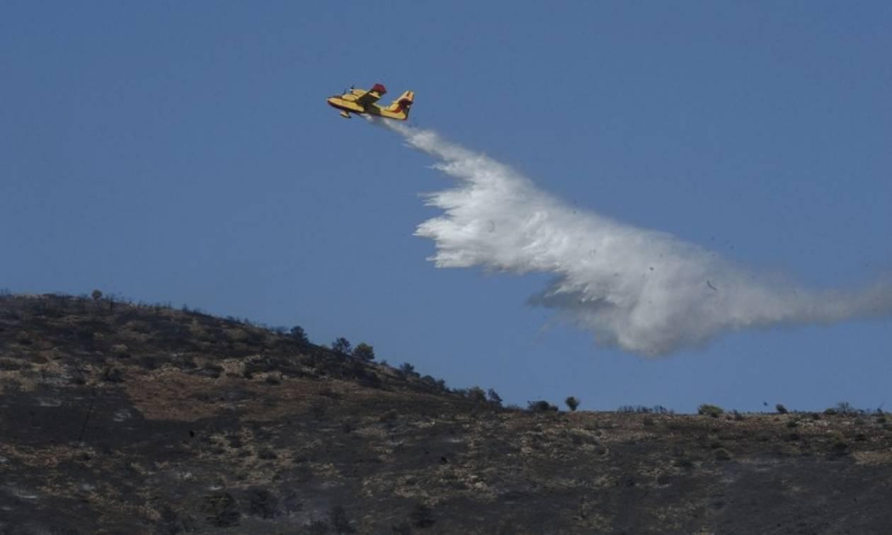 Υπό μερικό έλεγχο η φωτιά στα Καλύβια Αττικής