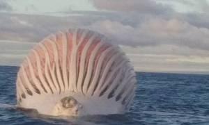 Ψαράς ανακάλυψε… άλιεν στον Ινδικό Ωκεανό! (video+photos)