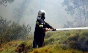 Φωτιά στην βόρεια Εύβοια: Υπό έλεγχο το πύρινο μέτωπο