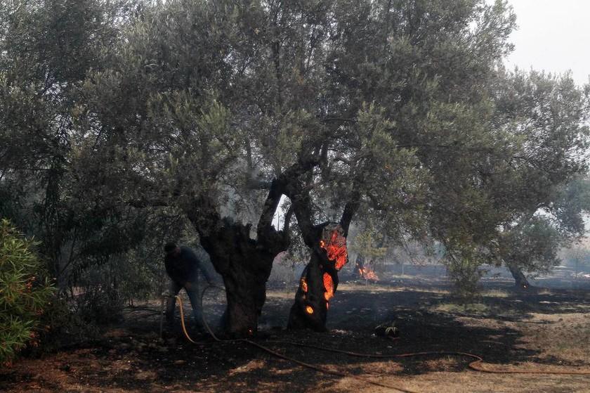 Φωτιά Εύβοια: Ανεξέλεγκτη για τρίτη ημέρα η πυρκαγιά - Σε κατάσταση έκτακτης ανάγκης η Λίμνη (pics)