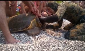 Ψαροντουφεκάς σώζει θαλάσσια χελώνα (video)